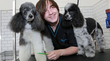 Tom Heaton-Clarke grooming miniature poodles 'Bond' and 'Bama' at The Pet Retreat Grooming Salon in