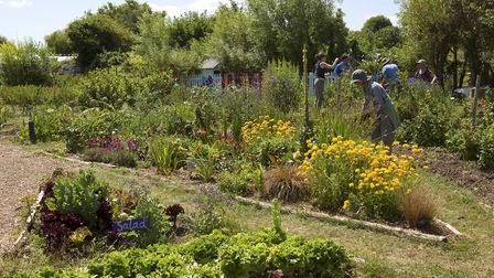 A wide range of produce and flowers are grown at Windmill Community Garden in Margate