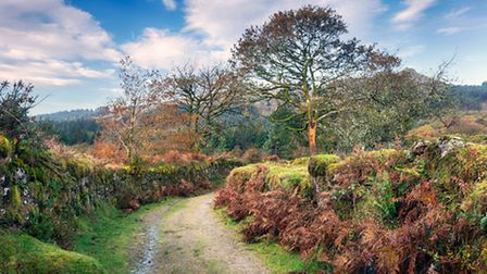 Dartmoor National Park in Devon © Helen Hotson, Shutterstock