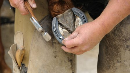 Farriers are one of the key horse carers - horse's hooves need trimming every six to eight weeks (ph