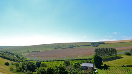 The vines of Breaky Bottom vineyard grow in a fold of the South Downs