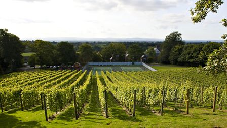 Carden Park vineyard and tennis courts
