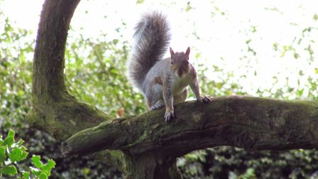 A squirrel in Delamere Forest