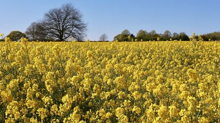 3rd place - Fields of Gold, Eccleston by Philip Bale