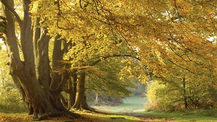 Autumn in the woods on the Ashridge Estate (photo: National Trust Images/Michael Caldwell)