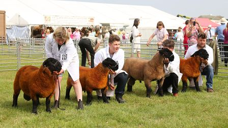 The Heifer Junior Competition at The Royal Cheshire Show