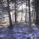 Blackheath Woods with frost by Jane Thomas