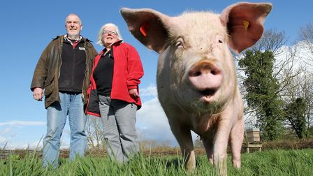 David and Gill Graham of The Cotswold Farmer with one of their sows (c) Antony Thompson / TWM