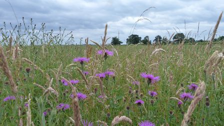 The meadow at Bickley Hall Farm