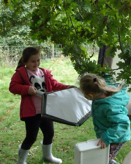 Finding out what lives on trees Photo: Claire Huxley