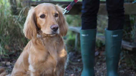 Dogs shuld be kept on leads around livestock