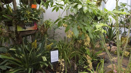 The mix of orchids and temperate plants (photo: Leigh Clapp)