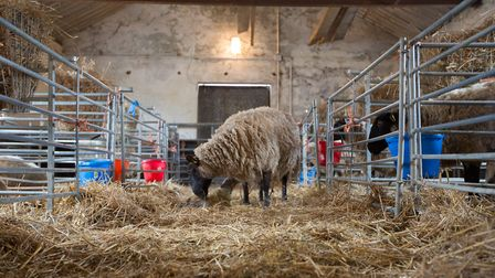 Day in the life of a livestock farmer (photo: Manu Palomeque)