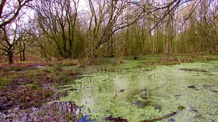 A pond in Windmill Wood at Alderley Edge