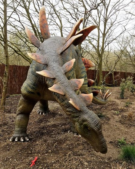 Stegosaurus - watch out for that tail! (photo: Louise McEvoy)