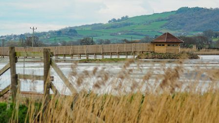 Seaton Wetlands is the perfect spot to see wading birds