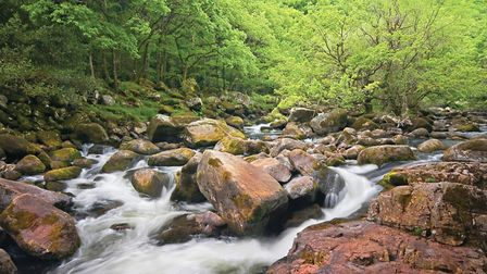 Dart Valley Nature Reserve is a dramatic destination