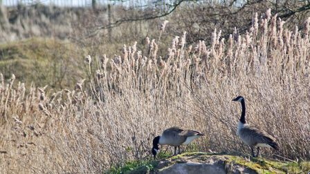 Dawlish Warren is a must-see reserve this summer