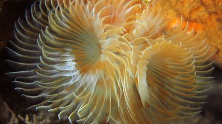 The flamboyant spectacle of underwater life