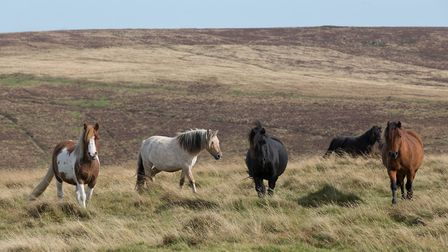 The Dartmoor Derb sees riders in small groups navigate their way through spectacular moorland