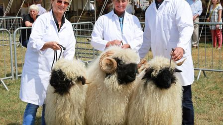 Group of Three Champion Valais Blacknose sheep here with (L-R); Esther Wheller with 'Elegance', Rene