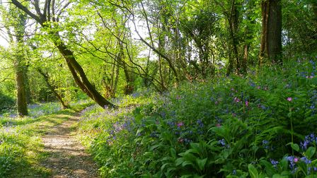 Take a stroll through the beautiful woodlands