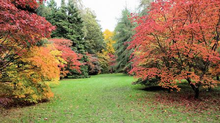 Westonbirt Arboretum is one of the venues participating in the National Lottery's #ThanksToYou campa