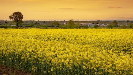Rapeseed field, by Steven Bell which came third in the 2018 Cheshire Life readers' photography compe
