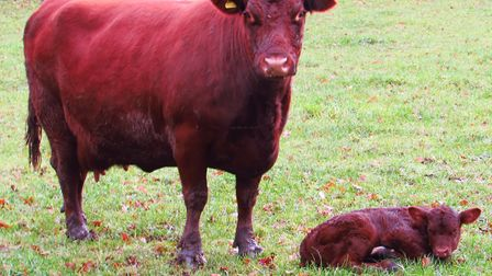 Mother and child grazing and gazing