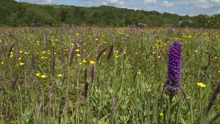 99% of wildflower meadows have gone