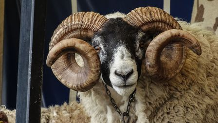 Fantastic farm animals will be on display at this year's Devon County Show