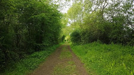Heading into Coombe Hill Nature Reserve