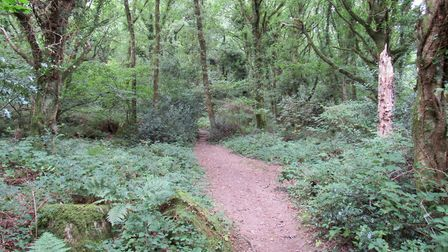 The path leads through atmospheric woodland as it heads up towards the rim of Lustleigh Cleave