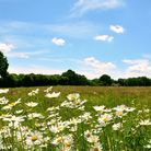 Wildflower walks with pubs in Kent (photo: BethAmber / GettyImages)