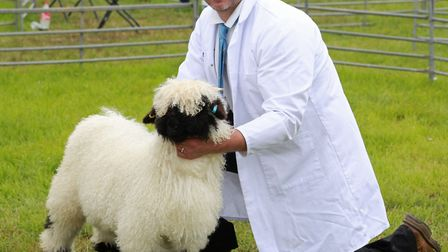 Gerallt Jones and a Valais Blacknose Sheep competing in the Inter Breed Championship *** Local Capti