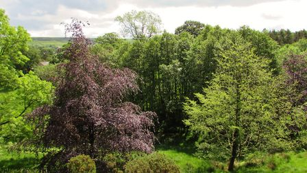 Wooded valley near Hollin Lane
