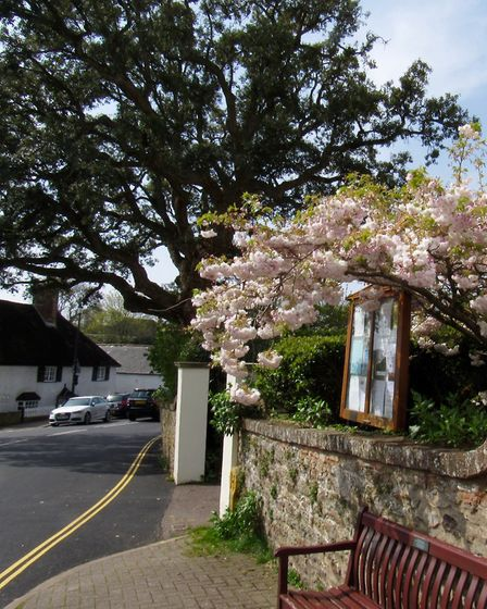 Sidbury is a delightful village at the start of the walk allow time to explore it