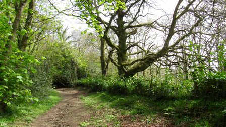 The path through Core Hill Wood on the way to Burscombe Farm