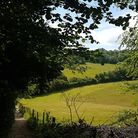 View-on-Polesden-Lacey-walk