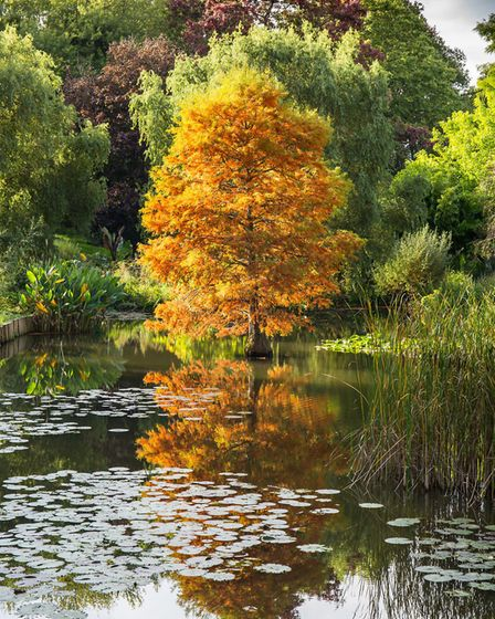 The lake at Harold Hillier Gardens, Romsey (Photo by James West)