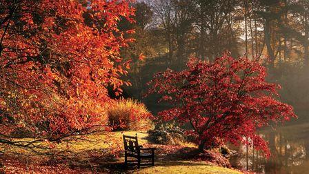 Acer palmatum by the Upper Womans Way Pond at Sheffield Park ©National Trust Images/Andrew Butler