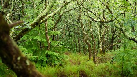 Ausewell Wood