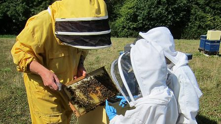 Beekeeping is still alive and well at Buckfast Abbey, albeit with a different emphasis these days