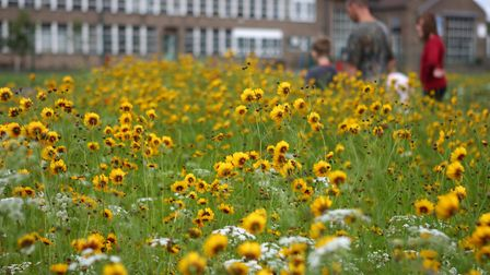 Urban planted flowers could help boost wildlife habitats. Picture by Paul Hobson