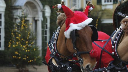 Horse dressed up as a reindeer, pulling the 'sleigh' at Christmas, at Polesden Lacey, Surrey.