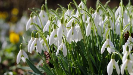 Snowdrop walk and talk at Hever Castle (photo: Leo Malsam, Getty Images)