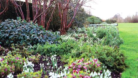 A sea of snowdrops and hellebores at Broadview Gardens (photo: Leigh Clapp)