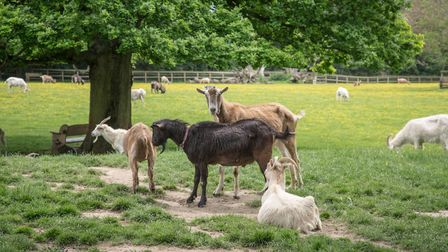 A visit to The Buttercup Sanctuary for Goats will lift your spirits - and you may even want to consi