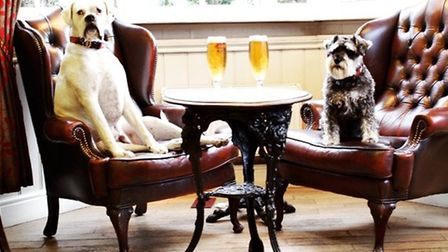 Resident pooches at The Fox and Hounds, Englefield Green