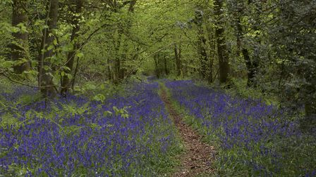 Wander the paths in the private Bluebell Wood near Alton Photo: Leigh Clapp